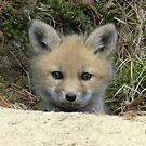 Red Fox kit by okcandids