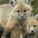 Cuteness! by okcandids