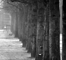 Misty Tuileries by Tiffany Dryburgh