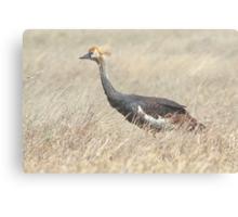 Juvenile Grey Crowned Crane, Serengeti, Tanzania  Canvas Print