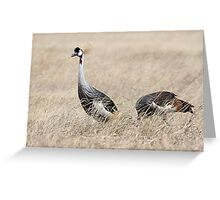 Grey Crowned Crane, Serengeti, Tanzania Greeting Card