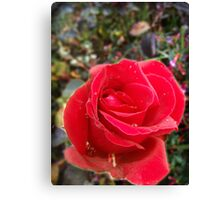 Rose From Eden Canvas Print