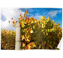 Autumn vines 2 - 2011 Poster