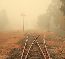 Into the Fog by Elaine Teague