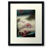 Sleeping Kitten Framed Print