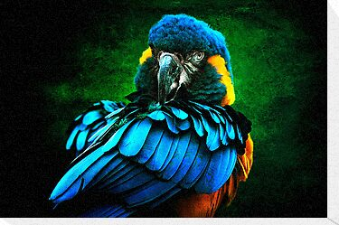 Blue Macaw by Tarrby