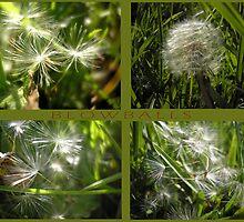 blowballs by andreajansen