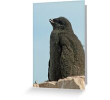 Adelie penguin chick Greeting Card