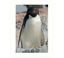 Adelie penguin 7 Art Print