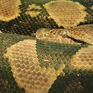 Snake Eye by Karen K Smith