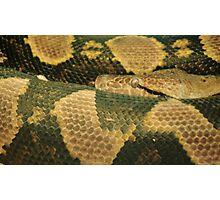 Snake Eye Photographic Print