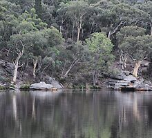 Dunn's Swamp Reflections - NSW Australia by Bev Woodman