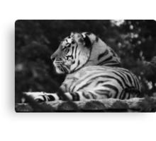 Peaceful Tiger Canvas Print