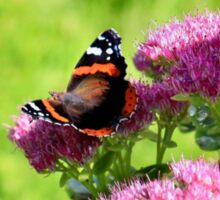 Red admiral butterfly Sticker