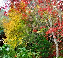 Flame Trees  by LisaErin
