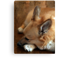Dreaming of Frisbees Canvas Print