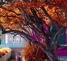 autumn by 7incondotta