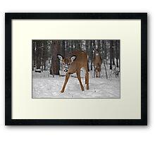 Curious Deer Framed Print