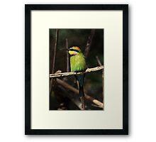 The Rainbow Bee Eater Framed Print