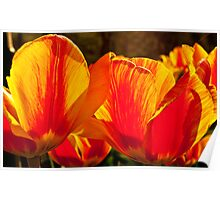 Tulip Fire Poster