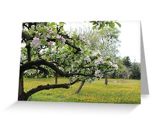 Orchard in Spring Greeting Card