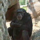 Chimpanzee by KAGPhotography