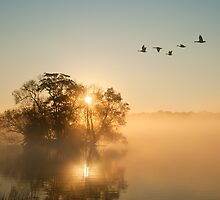 On Golden Pond  by imagejournal