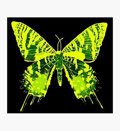 Sunset Moth Yellow Photographic Print