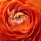Orange Swirl by BarkingGecko