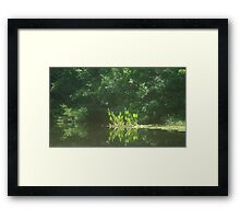 PICKEREL WEED ISLAND Framed Print
