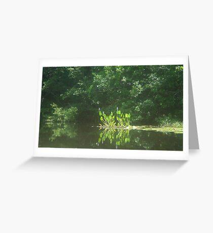 PICKEREL WEED ISLAND Greeting Card