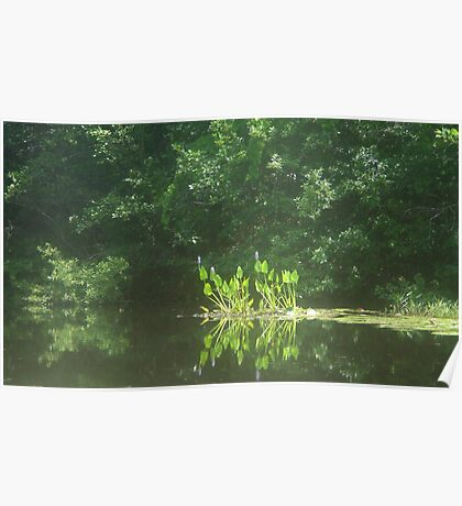 PICKEREL WEED ISLAND Poster