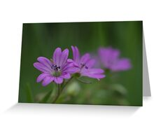 Dove's-foot Crane's-bill Greeting Card