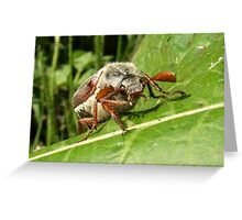 Smile for the Camera!! Greeting Card