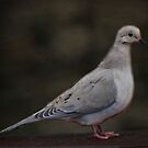 Mourning Dove Beauty by Renee Blake