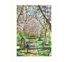 Blossoms On The Path Art Print