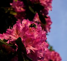 Bees paradise by moor2sea