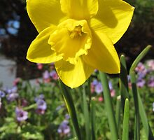 Delightful Daffodil by hummingbirds
