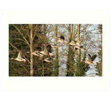 Flight of Geese Art Print