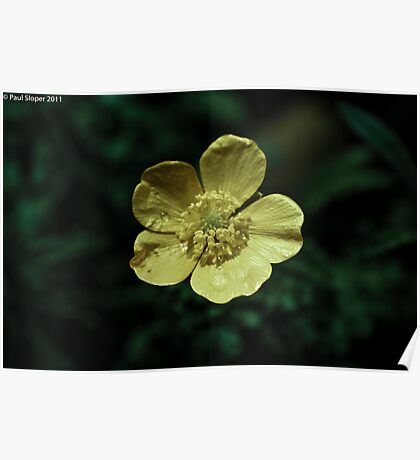 Yellow Flower in Bloom Poster