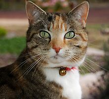 Purdy Tabby Cat # 2 by Eve Parry