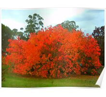 Mapple tree in sping Poster
