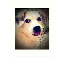 05-04-11:  One Dog's Opinion Art Print