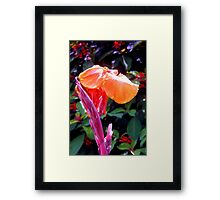 Canna lily with spike in soft focus Framed Print
