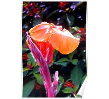Canna lily with spike in soft focus Poster