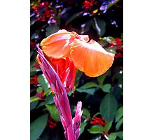 Canna lily with spike in soft focus Photographic Print