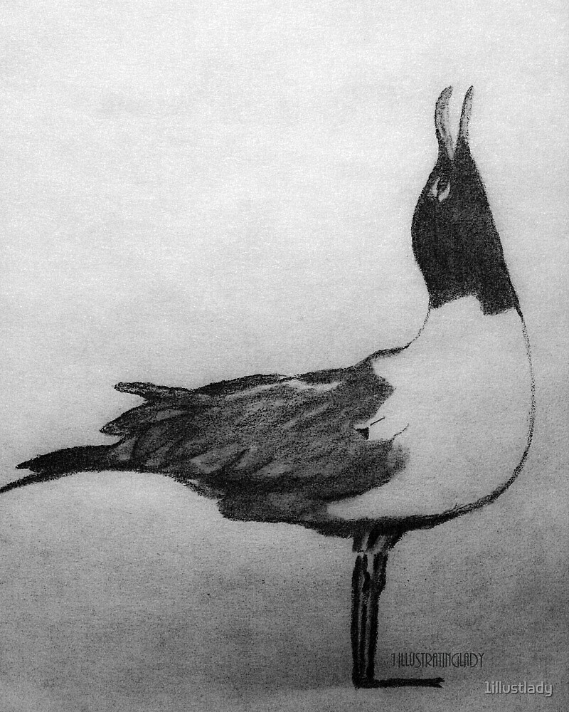 Laughing Seagull by 1illustlady
