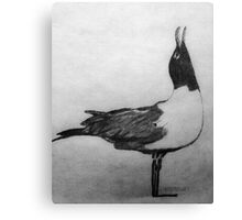 Laughing Seagull Canvas Print