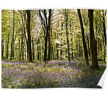 Blue-bells and Beechwood Poster