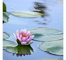 Light Pink Waterlily Photographic Print
